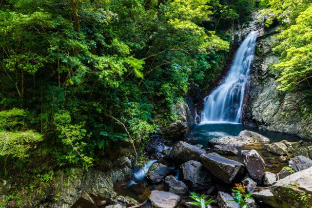 【体験】     比地大滝マイナスイオン100%のトレッキング&キャンプ場は遊歩道が整備されており片道約40分歩いて比地大滝にたどりつきます!道中ヒカゲヘゴ等多彩な亜熱帯植物の観察ポイント。やんばるの自然を堪能してみてはいかかがですか?